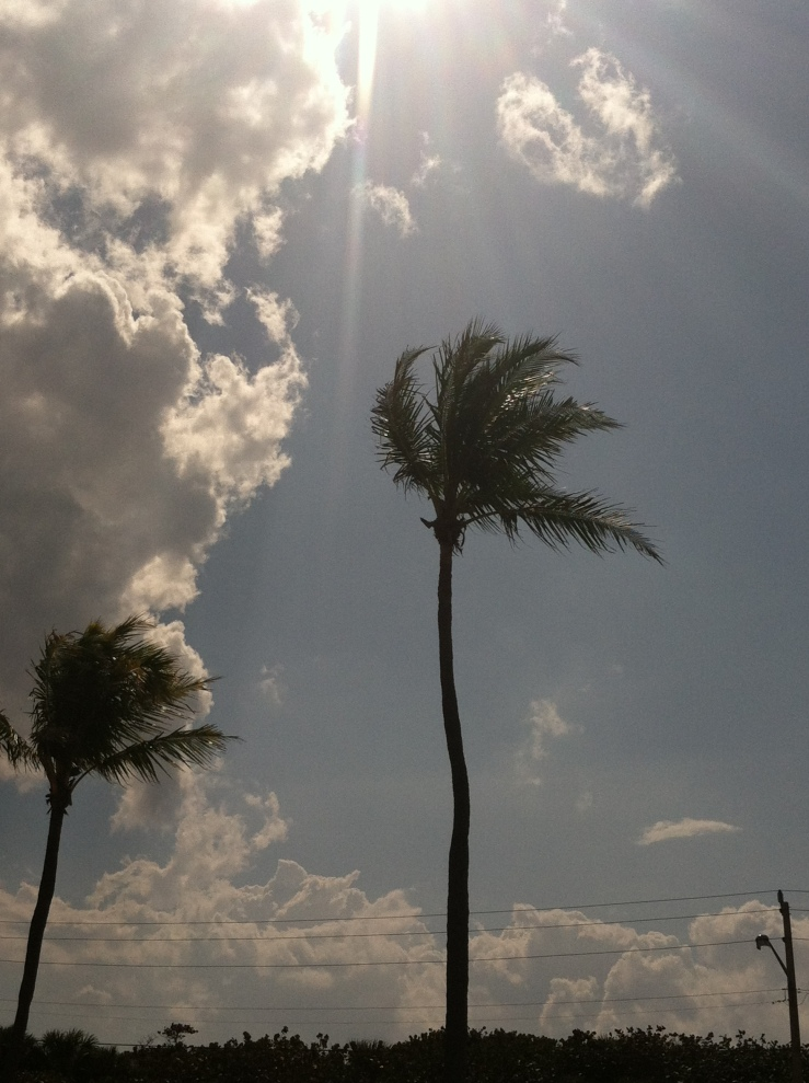 Palm trees @ the beaches of Fort Lauderdale